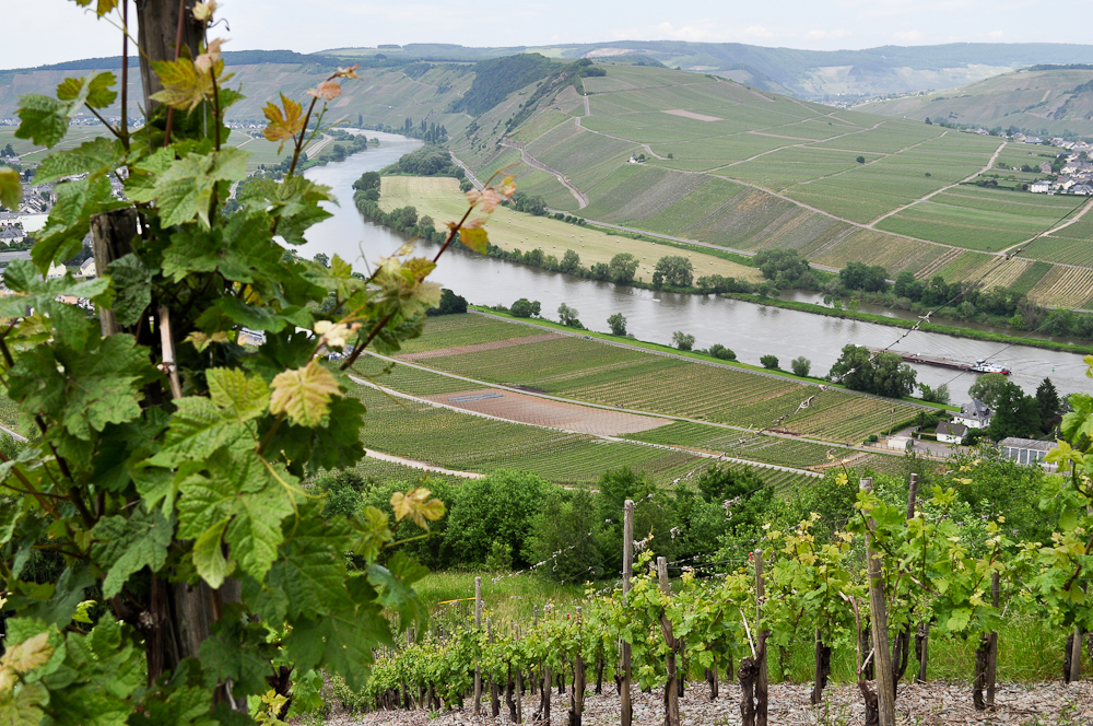A week in Leiwen and Germany's Mosel Valley