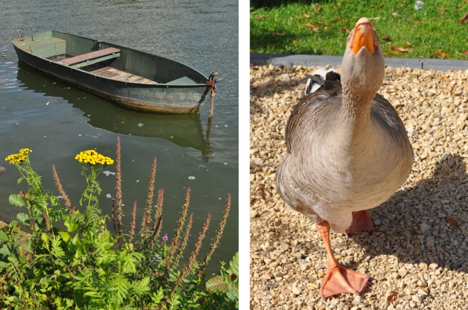 Boat on the Meuse + Chasing goose in Profondeville, Belgium