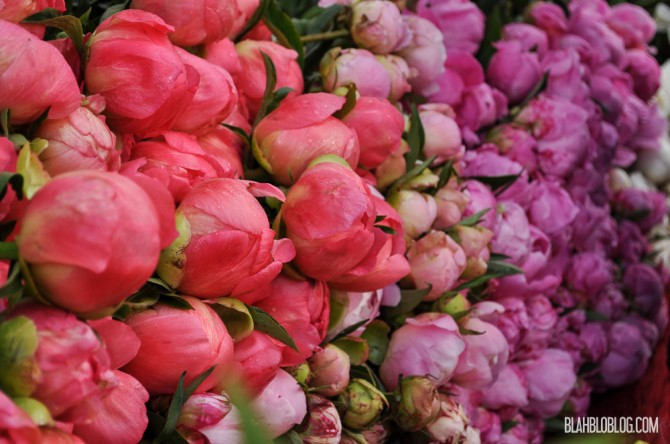 Peonies at the market in Amsterdam