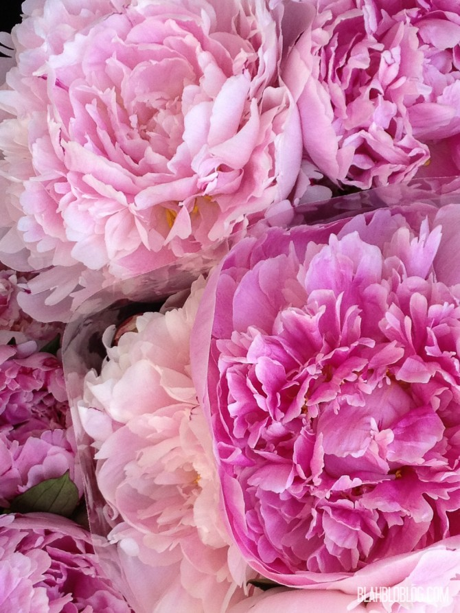 Peonies at a florist in the Netherlands